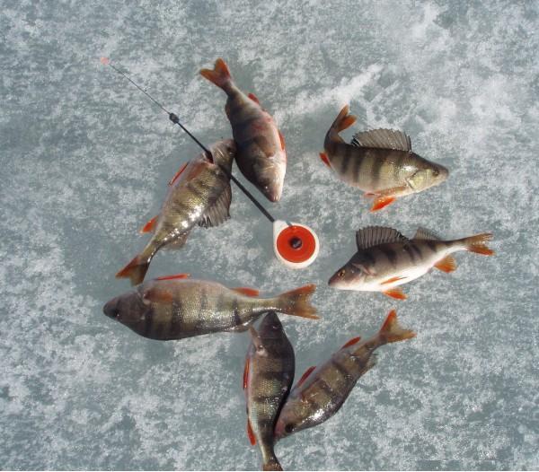 репейник - как споймать рыбу